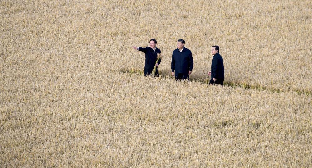 中國農業農村部長:中國農村2020年即將全部脫貧