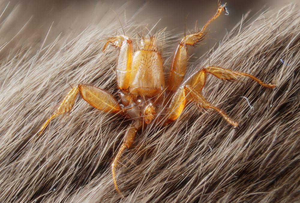 蛇頭毛毛蟲和吃蝙蝠的蜘蛛: 自然界可怕的例子