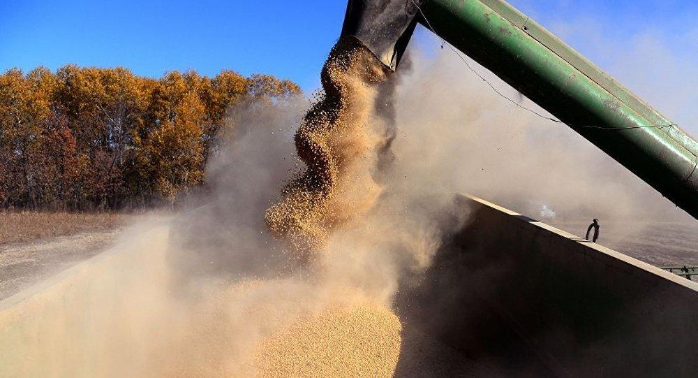 俄羅斯將在6月30日前徵收大豆出口關稅