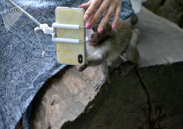 哥斯達黎加或禁止遊客與野生動物自拍