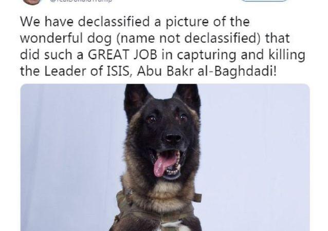 斬首巴格達迪行動立功軍犬受邀作客白宮