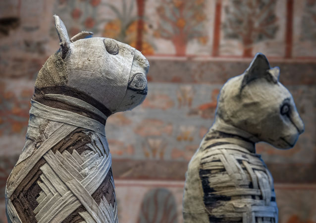 埃及政府對博物館裡的不當行為進行罰款