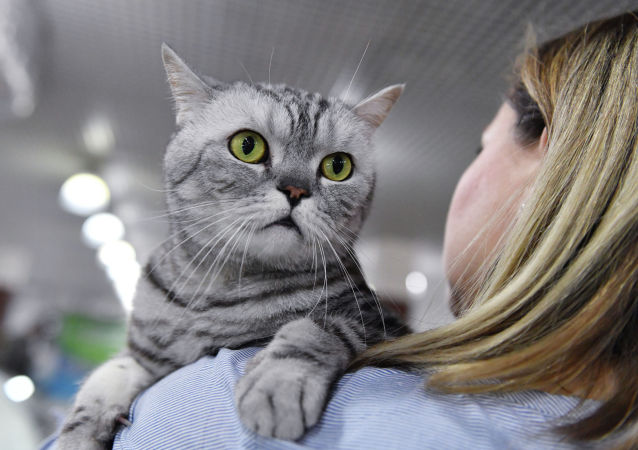 研究:武漢的貓群感染冠病 或由人傳播