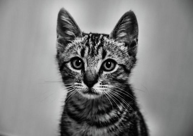 生物學家講述如何正確判斷貓的心情