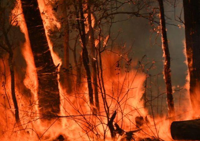 澳大利亞林火燒毀了演員羅素·克勞的一處別墅中的幾棟房屋