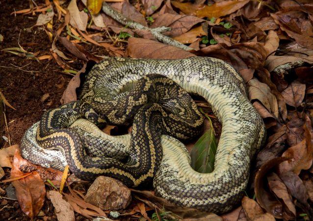 美國佛州一公園因群蛇交配而部分關閉