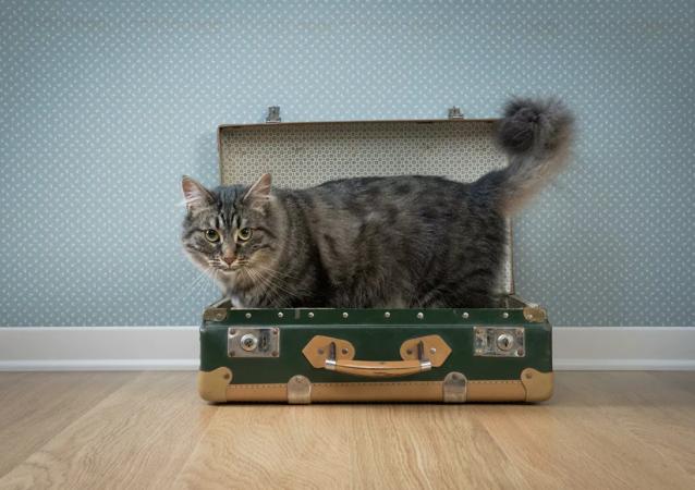 美國一隻貓咪在全國旅行五年後被找到