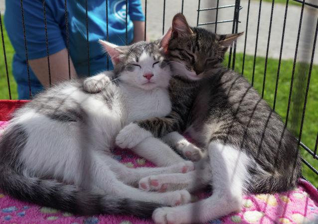 德國兩只貓感染冠狀病毒