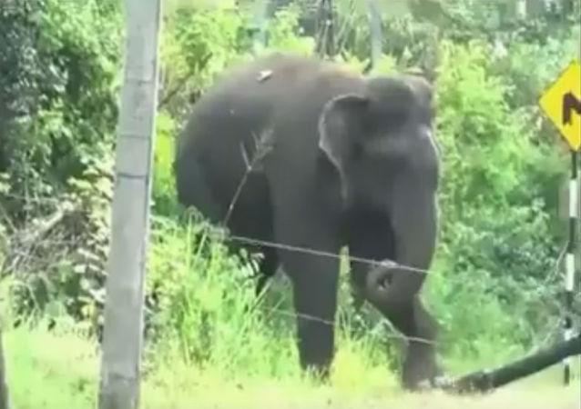 令人吃驚的機靈大象引發網友熱議