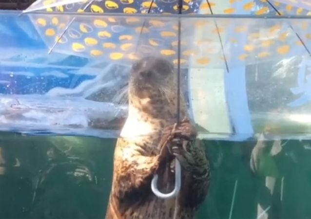 撐傘小海豹一臉困惑面對攝影師