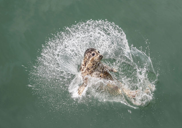 英國潛水員與溫柔海豹水中共舞