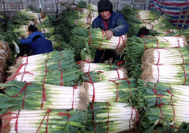 媒體:尼泊爾因印度洋蔥出口禁令改從中國進口