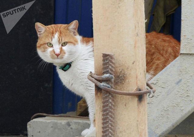 躥紅網上的貓咪