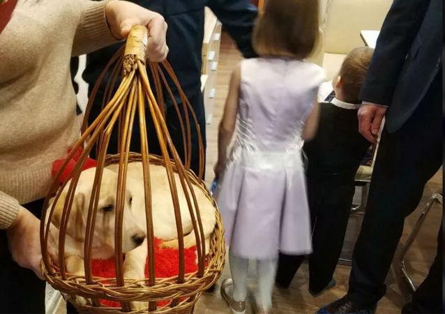 卡盧加州女孩收到普京送的幼犬