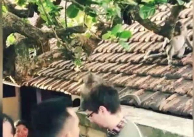 猴子不願合影並偷走遊客眼鏡