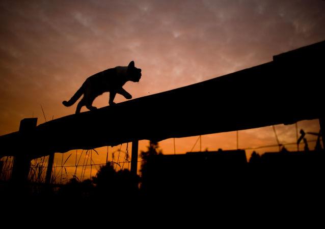 澳寵物貓給主人造成了約20萬元的損失
