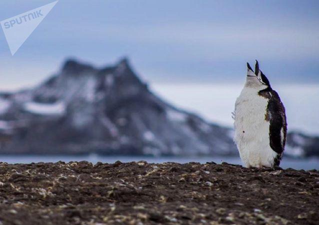 專家談氣候變化對企鵝的危害