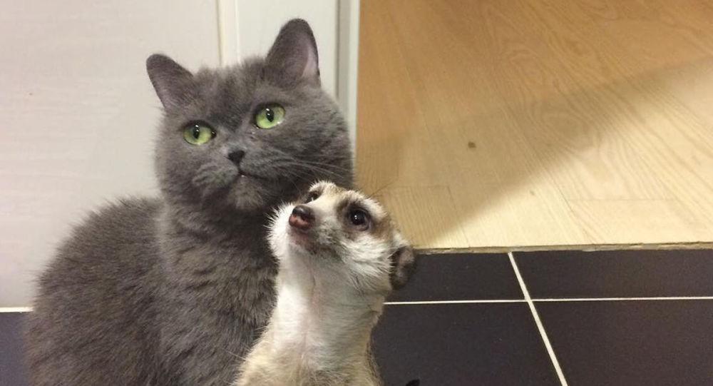 貓咪和狐獴的友誼征服互聯網