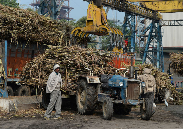 中國公司能否從印度和馬來西亞「棕櫚油危機」中受益?
