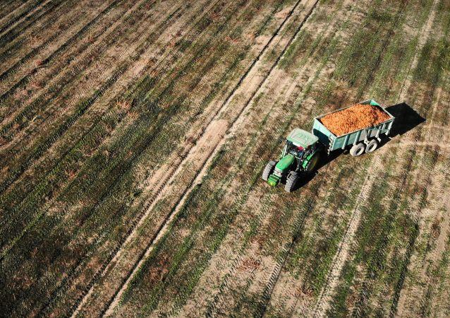 意大利農民藝術家用拖拉機在田間繪制新冠病毒圖
