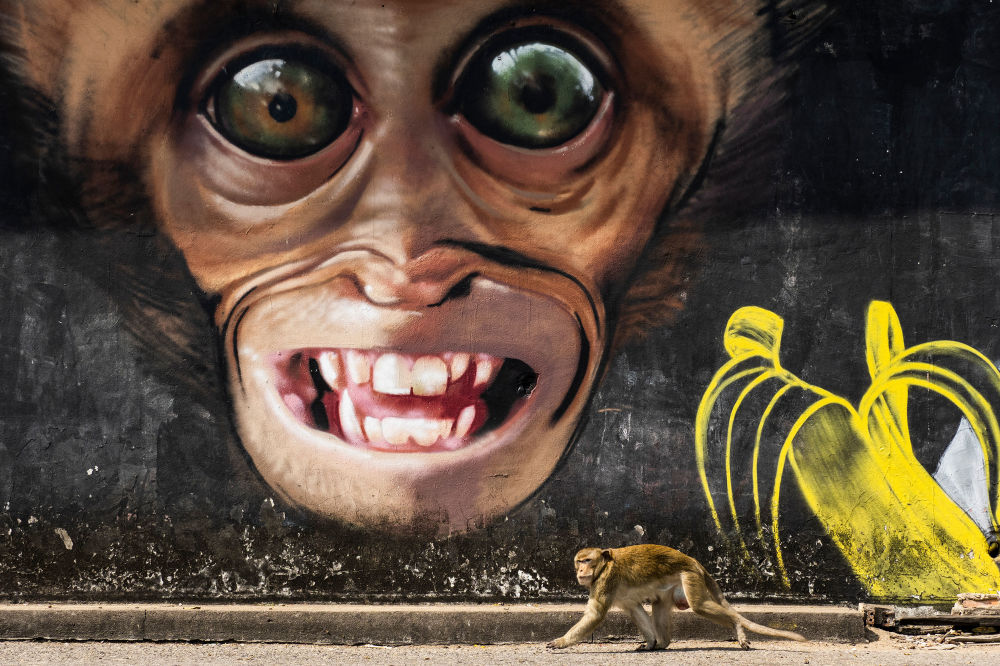西班牙專業攝影師瓊·德拉·馬拉的攝影系列《猴子城市》中的作品《猴子塗鴉》