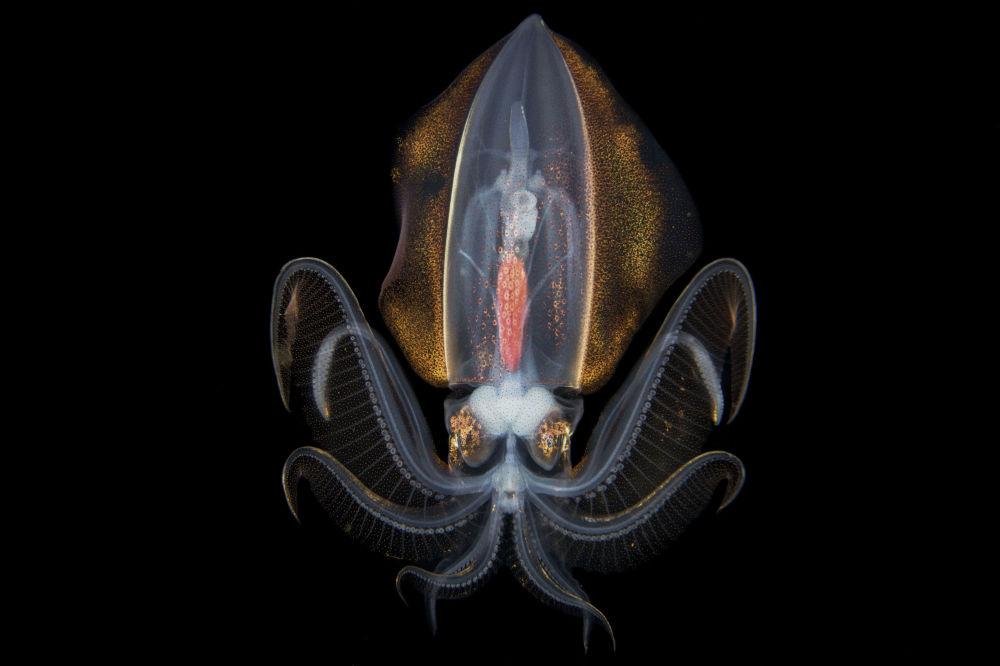 中國專業攝影師蔡松達的攝影系列《水下銀河》中的作品《海洋夜夢》