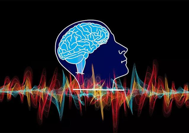 人類全部腦葉均負責面部和位置識別