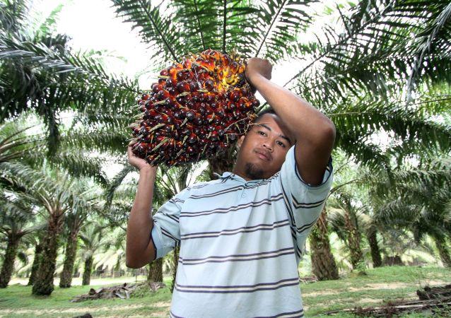 馬來西亞希望與印度盡快解決「棕櫚油危機」
