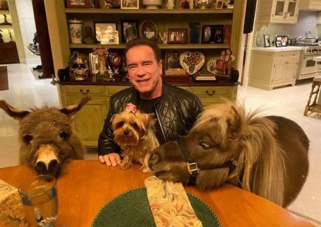 施瓦辛格在隔離期間與自己的寵物驢下象棋