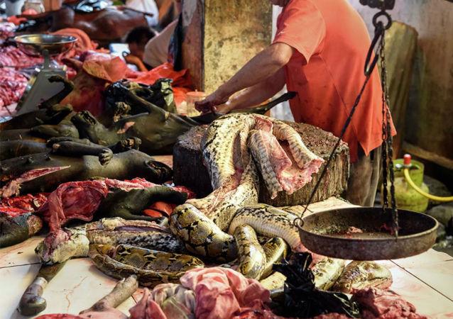 動物貿易市場