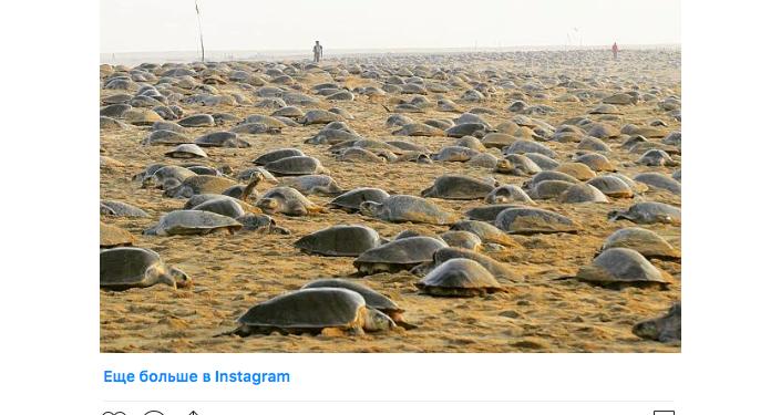 海龜佔領印度空無一人的海灘