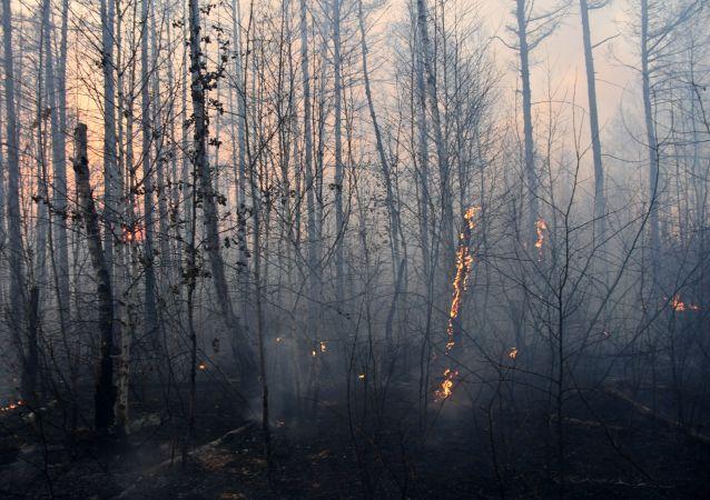 俄羅斯森林消防部門單日撲滅39處林火