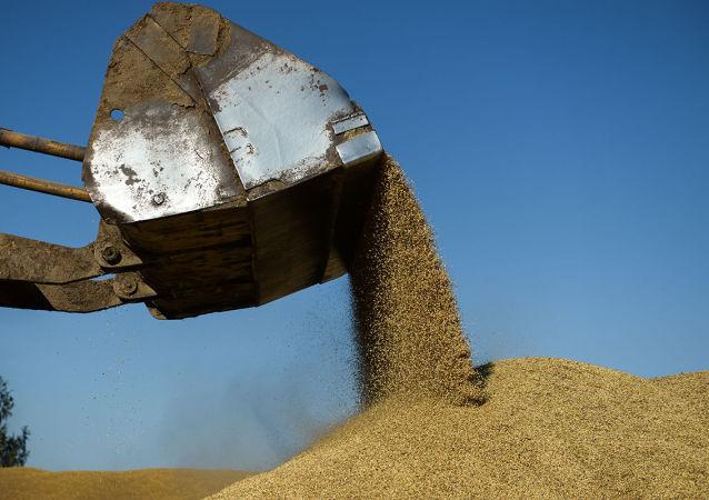 俄向朝鮮提供2.5萬噸糧食