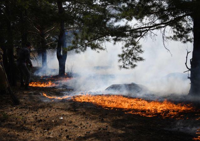 俄堪察加邊疆區北部因11處森林火災進入緊急狀態