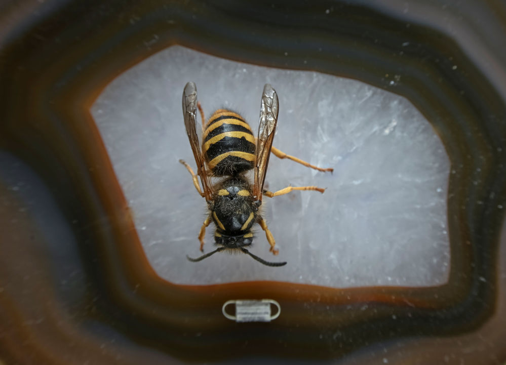 昆蟲藝術品