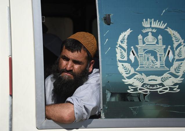 媒體:阿富汗政府宣佈釋放317名塔利班武裝分子