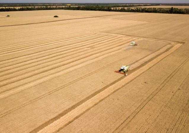 俄農業部:2020年俄穀物收成將超過1.25億噸 小麥至少8200萬噸