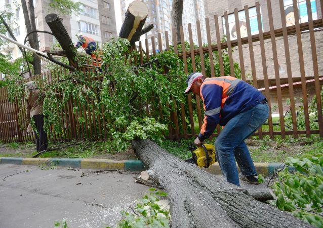 大樹被強風吹倒(資料圖片)